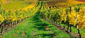nuovi trend di consumo vino post covid